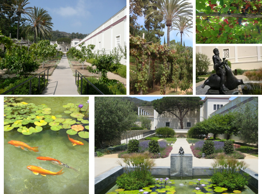The Herb Garden: fruit trees, flowering shrubs, grapevines, herbs, fountain & water lily pool filled with Koi, 114 year-old Italian Stone Pine at far end