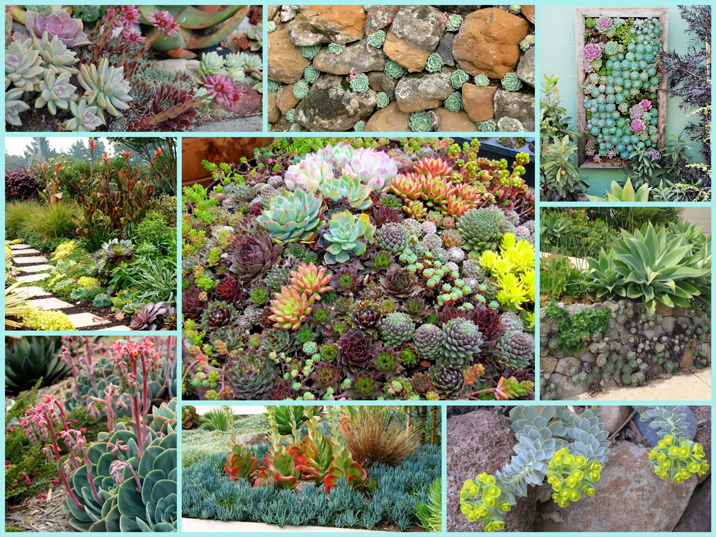 9 image collage of beautiful succulent planting opportunities.