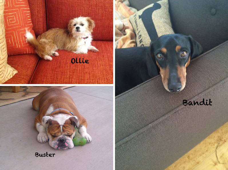 Collage of my 4-legged clients ~ Buster, Bandit and Ollie