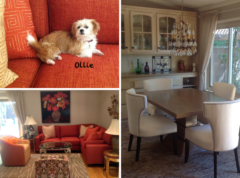 Collage of Ollie & his home's living and dinning rooms.